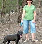 Dog Nature Walking