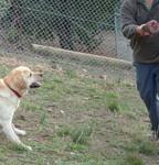 Dog Playtime