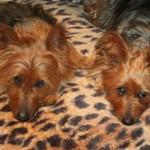 Melbourne Dog Accommodation